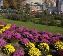Peste 450 de arbori şi mai mult de 130.000 de flori plantate în Sibiu