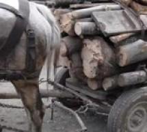 Lemn confiscat în Hoghilag