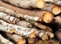 Aproape 60 de mc de lemn, confiscat de polițiști în comuna Gura Râului