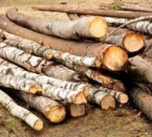 Acțiunea Scutul Pădurii în județul Sibiu