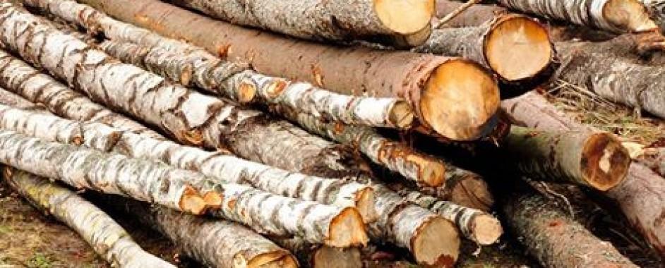Infracțiune la regimul silvic în județul Sibiu