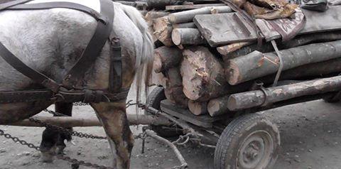 Cercetați penal  pentru furt de material lemnos