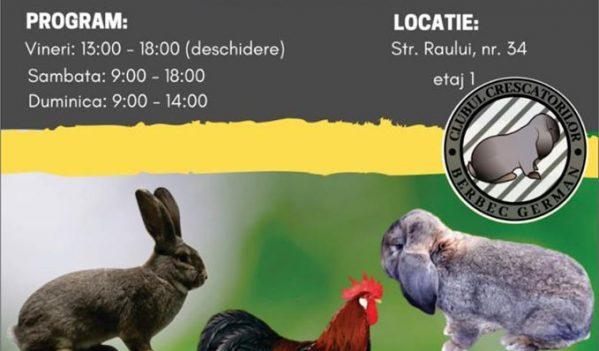 Expoziție de păsări de curte și iepuri de rasă în Sibiu